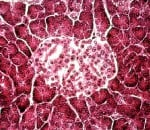 biohub celulas