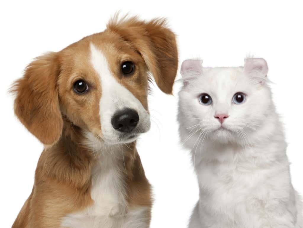 Los animales tienen miedo, emociones y sentimientos?