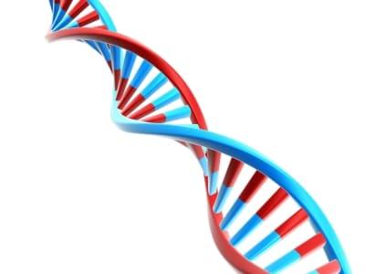 un gen defectuoso podría ser la causa de la diabetes canal