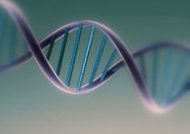 Un gen frena la diabetes tipo 2