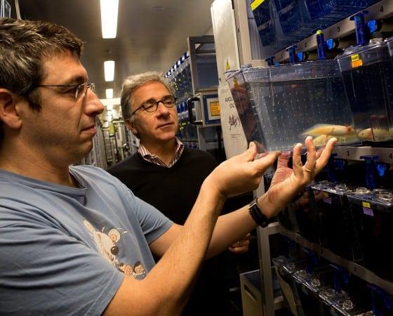 células productoras de insulina Dr. Doug Melton