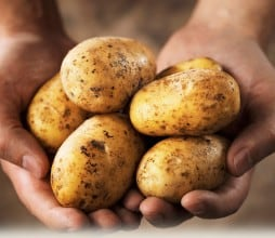 patatas diabetes gestacional