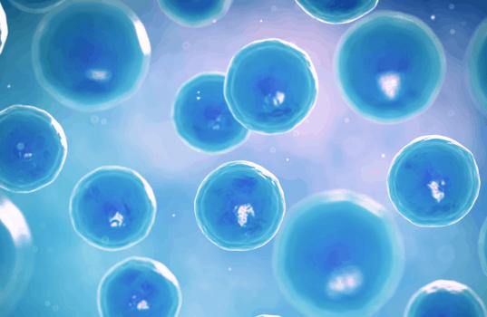 células inmunitarias