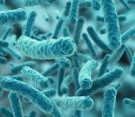 metformina mejora bacterias intestinales