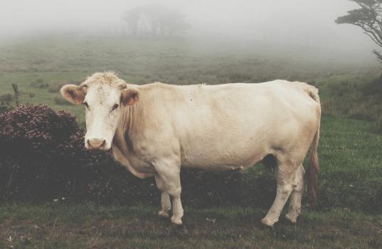 Leche de vaca diabetes tipo 1