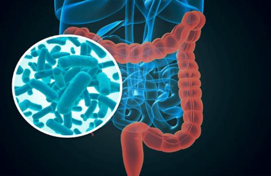 Investigadores españoles han demostrado la relación entre la microbiota intestinal -bacterias intestinales- y el riesgo de desarrollar diabetes tipo 1.