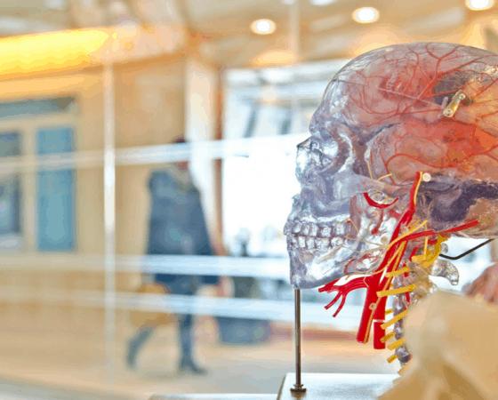 conectividad cerebral